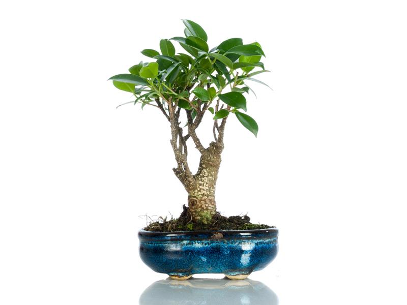 Bomboniere bonsai bomboniere originali bomboniere for Accessori per bonsai