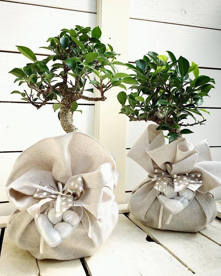 bomboniere per matrimonio bomboniere bonsai bomboniere