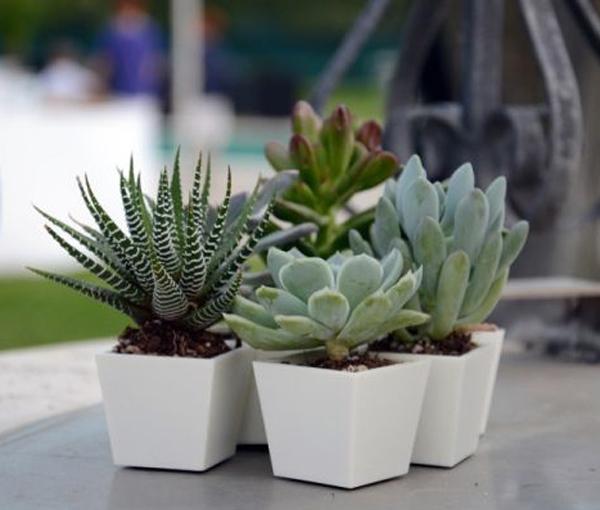 Bomboniere con piante grasse - Vasi per piante grasse ...