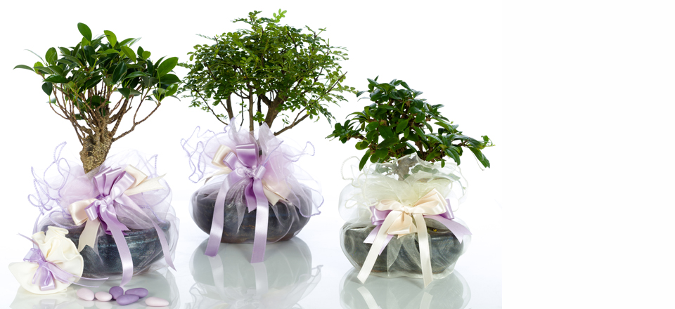 Favorito Bomboniere bonsai, bomboniere originali, bomboniere solidali  BV17